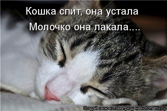 Котоматрица: Кошка спит, она устала Молочко она лакала....