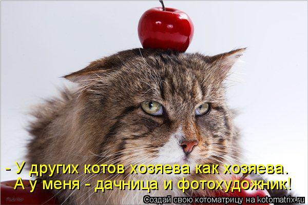 Котоматрица - - У других котов хозяева как хозяева. А у меня - дачница и фотохудожни