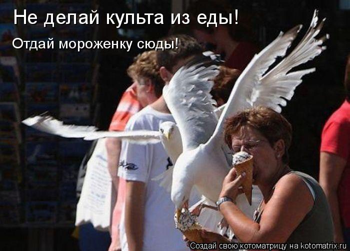 Котоматрица: Не делай культа из еды! Отдай мороженку сюды!