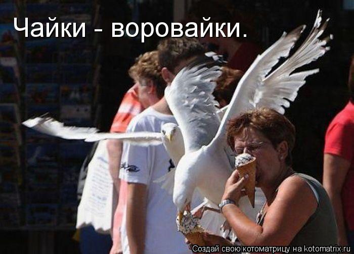 Котоматрица: Чайки - воровайки.