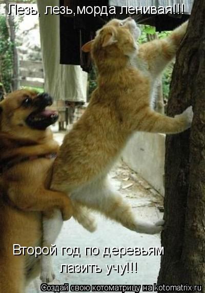 Котоматрица: Второй год по деревьям  лазить учу!!! Лезь, лезь,морда ленивая!!!