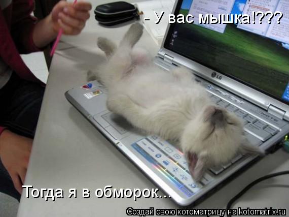 Котоматрица: - У вас мышка!??? Тогда я в обморок...