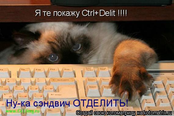 Котоматрица: Я те покажу Ctrl+Delit !!!! Ну-ка сэндвич ОТДЕЛИТЬ!