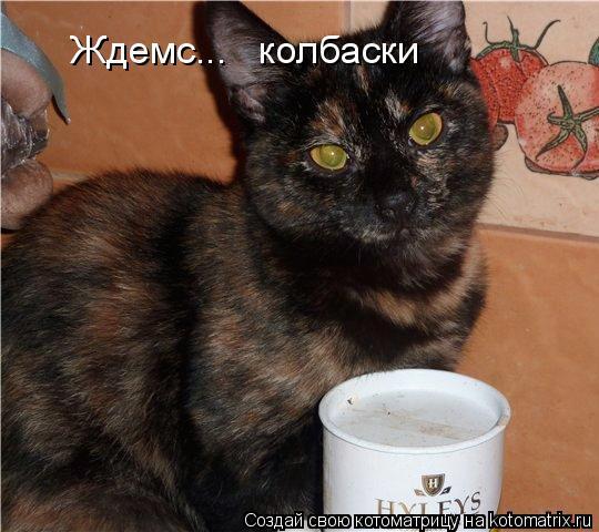 В добрые руки Эта кошечка из Подмосковья.  Балашиха.  В подъезде в электрощитках было найдено 7 котят, их мать убило...
