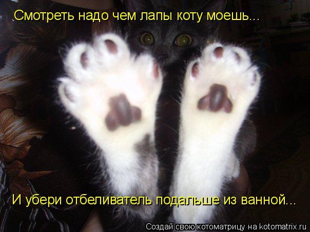 Котоматрица: Смотреть надо чем лапы коту моешь... И убери отбеливатель подальше из ванной...