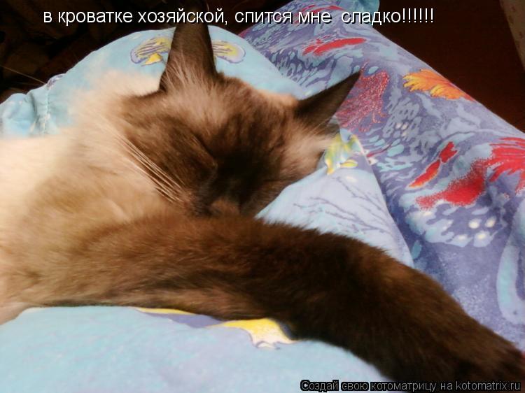 Котоматрица: в кроватке хозяйской, спится мне  сладко!!!!!!