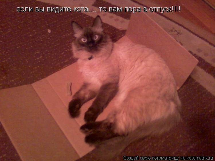 Котоматрица: если вы видите кота.... то вам пора в отпуск!!!!