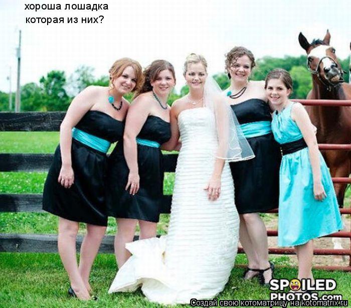 Котоматрица: хороша лошадка которая из них?