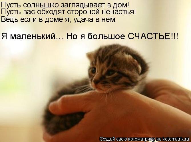 Котоматрица: Пусть солнышко заглядывает в дом! Пусть вас обходят стороной ненастья! Ведь если в доме я, удача в нем. Я маленький... Но я большое СЧАСТЬЕ!!!