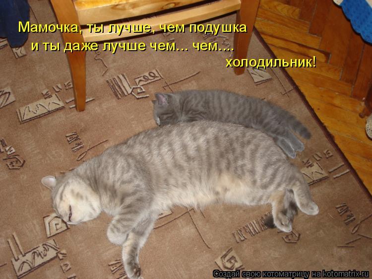 Котоматрица - Мамочка, ты лучше, чем подушка и ты даже лучше чем... чем.... холодиль