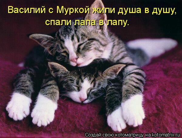 Котоматрица: Василий с Муркой жили душа в душу, спали лапа в лапу.