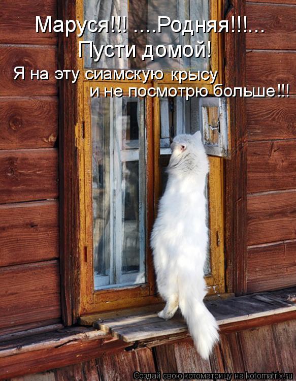 Котоматрица: Маруся!!! ....Родняя!!!... Пусти домой! Я на эту сиамскую  и не посмотрю больше!!! крысу