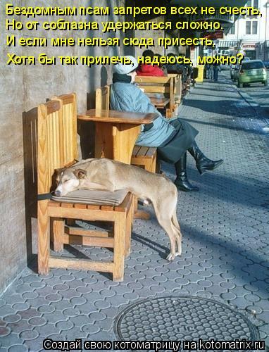 Котоматрица: Бездомным псам запретов всех не счесть, Но от соблазна удержаться сложно. И если мне нельзя сюда присесть, Хотя бы так прилечь, надеюсь, можн