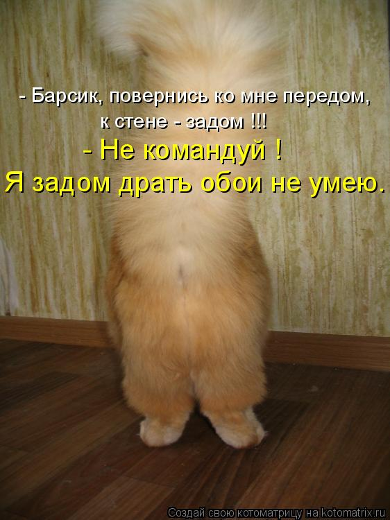 Котоматрица: - Барсик, повернись ко мне передом, к стене - задом !!! - Не командуй ! Я задом драть обои не умею.