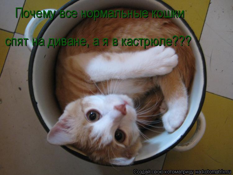Котоматрица: Почему все нормальные кошки  спят на диване, а я в кастрюле???