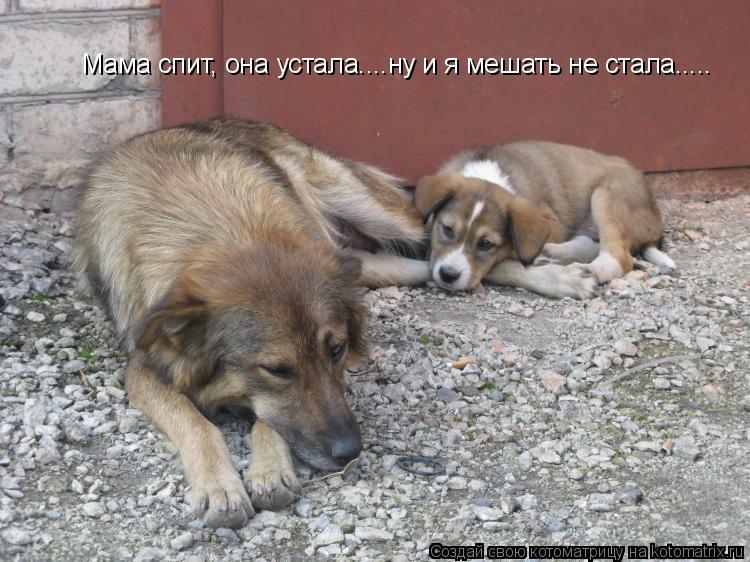Котоматрица: Мама спит, она устала....ну и я мешать не стала.....