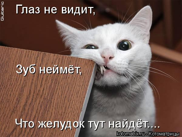 Котоматрица: Глаз не видит, Зуб неймёт, Что желудок тут найдёт....