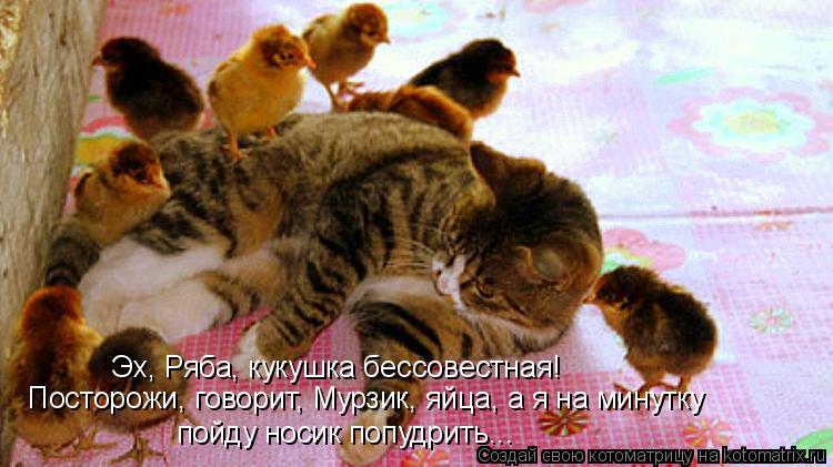 Котоматрица - Эх, Ряба, кукушка бессовестная! Посторожи, говорит, Мурзик, яйца, а я