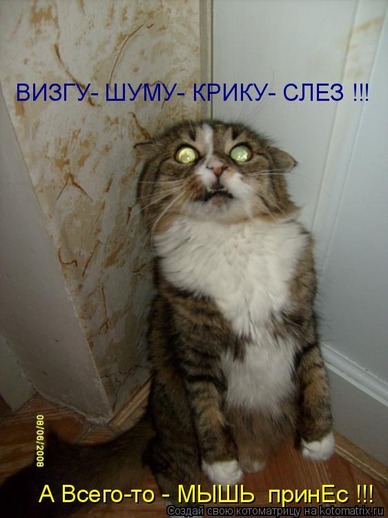 Котоматрица - А Всего-то - МЫШЬ  принЕс !!! ВИЗГУ- ШУМУ- КРИКУ- СЛЕЗ !!!