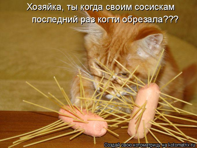 Котоматрица - Хозяйка, ты когда своим сосискам  последний раз когти обрезала???