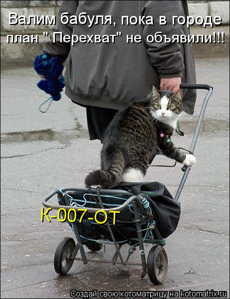 "Котоматрица: Валим бабуля,  пока в городе  план "" Перехват"" не объявили!!! К-007-ОТ"