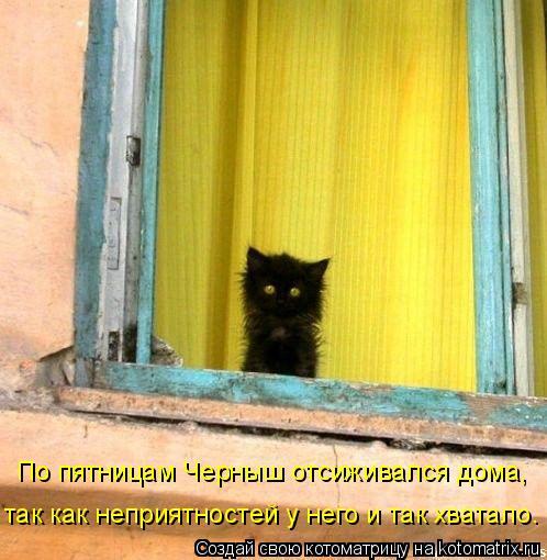 Котоматрица - По пятницам Черныш отсиживался дома, так как неприятностей у него и та