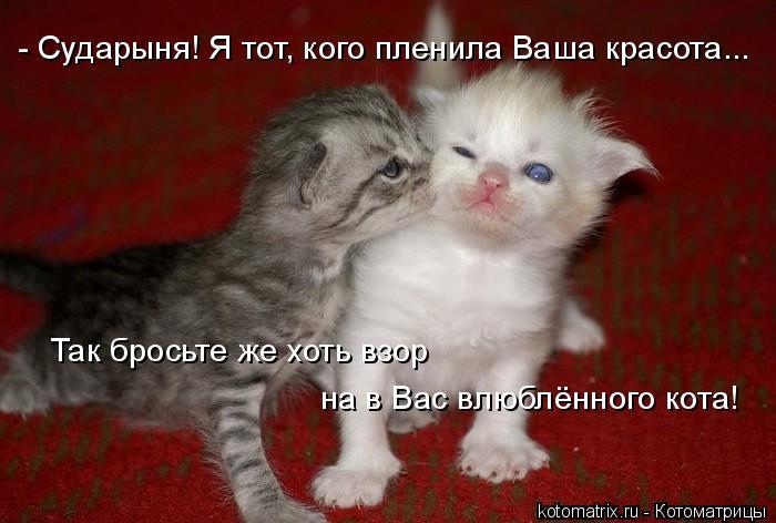 Котоматрица: - Сударыня! Я тот, кого пленила Ваша красота... Так бросьте же хоть взор на в Вас влюблённого кота!