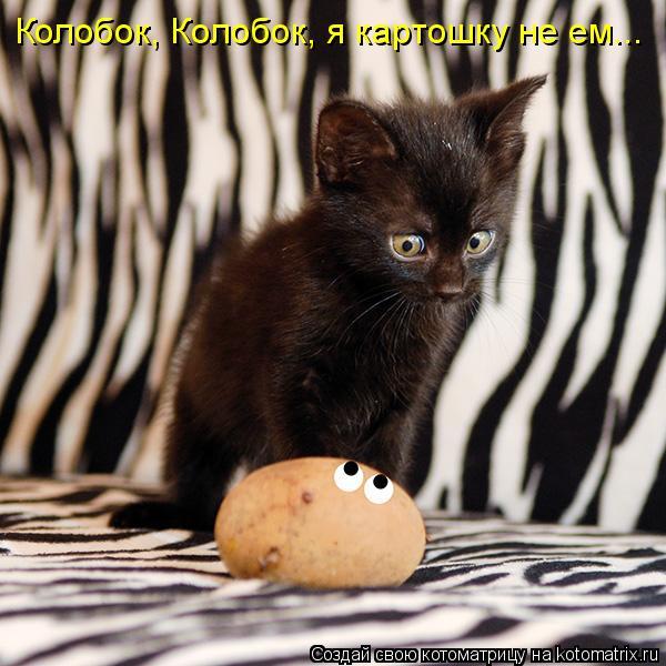 Котоматрица: Колобок, Колобок, я картошку не ем...