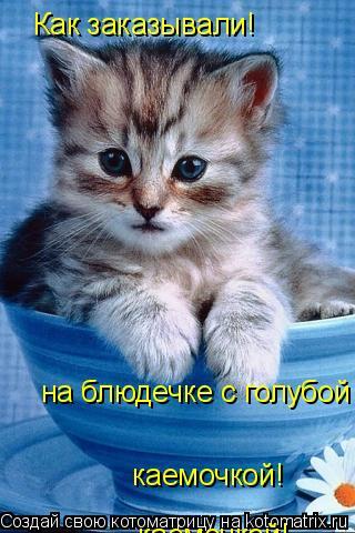 Котоматрица: Как заказывали! на блюдечке с голубой каемочкой!  каемочкой!  каемочкой!