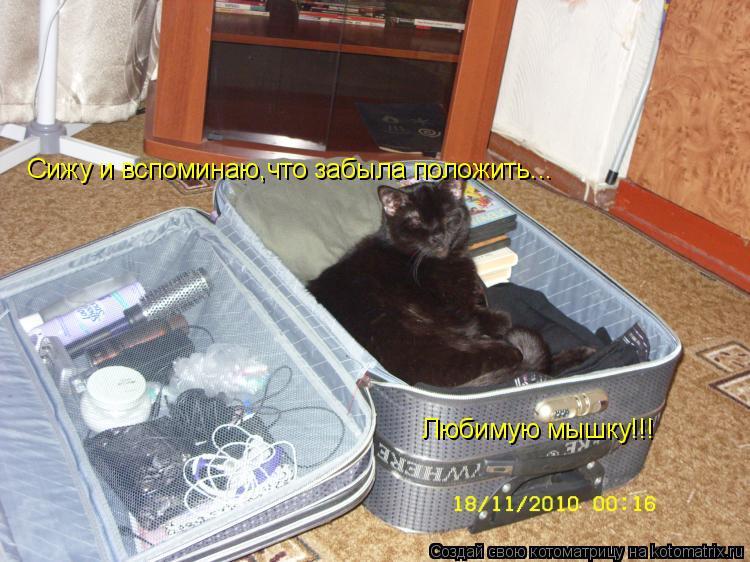 Котоматрица: Сижу и вспоминаю,что забыла положить... Любимую мышку!!!