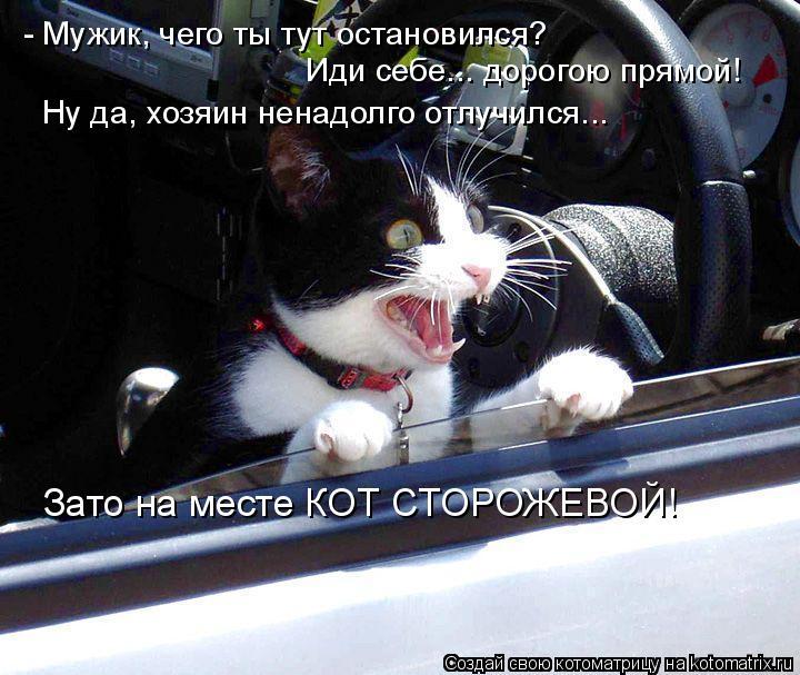 Котоматрица: - Мужик, чего ты тут остановился?  Иди себе... дорогою прямой! Ну да, хозяин ненадолго отлучился...  Зато на месте КОТ СТОРОЖЕВОЙ!