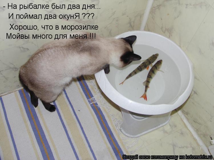 Котоматрица: - На рыбалке был два дня... И поймал два окунЯ ??? Хорошо, что в морозилке Мойвы много для меня !!!