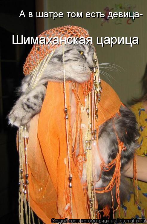 Котоматрица: Шимаханская царица А в шатре том есть девица-
