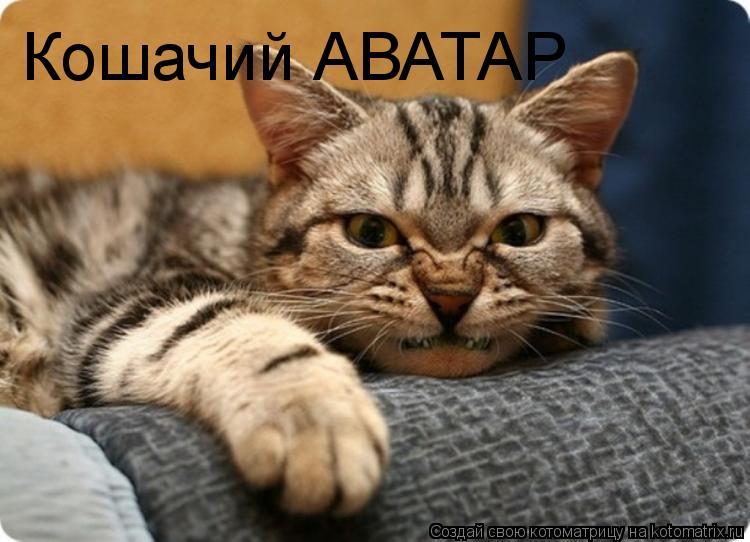 Котоматрица: Кошачий АВАТАР