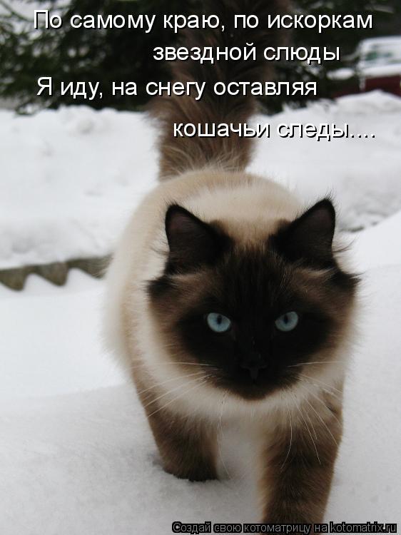 Котоматрица: По самому краю, по искоркам  звездной слюды Я иду, на снегу оставляя кошачьи следы....