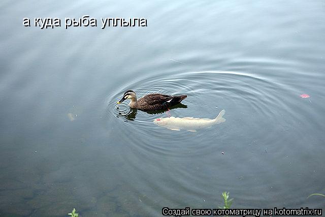 Котоматрица: а куда рыба уплыла