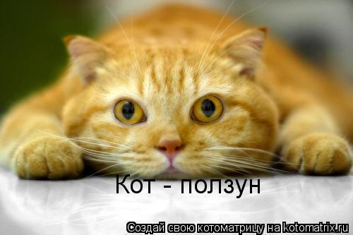 Котоматрица: Кот - ползун