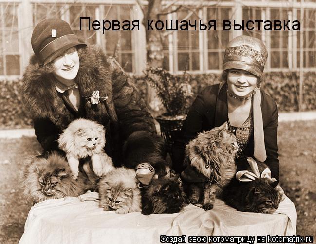 Котоматрица: Первая кошачья выставка