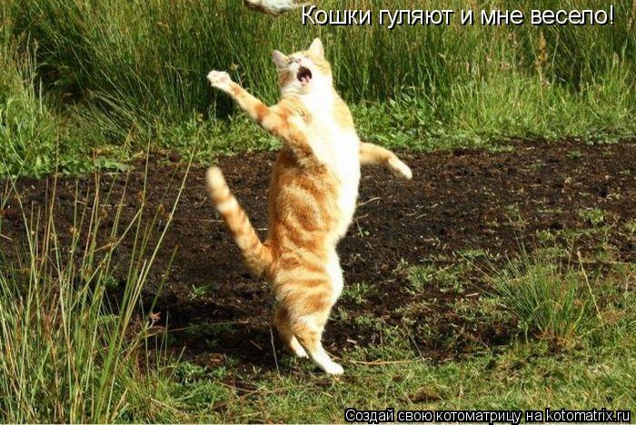 Котоматрица: Кошки гуляют и мне весело!