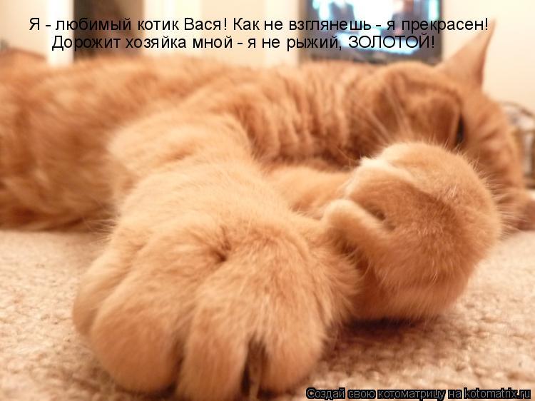 Котоматрица: Я - любимый котик Вася! Как не взглянешь - я прекрасен! Дорожит хозяйка мной - я не рыжий, ЗОЛОТОЙ!