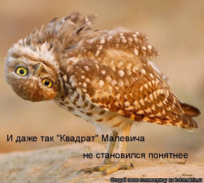 """Котоматрица: И даже так """"Квадрат"""" Малевича  не становился понятнее"""