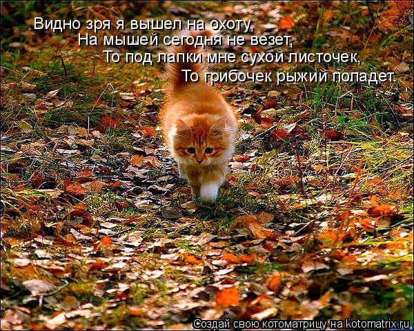 Котоматрица: То под лапки мне сухой листочек, На мышей сегодня не везет, То грибочек рыжий попадет. Видно зря я вышел на охоту,