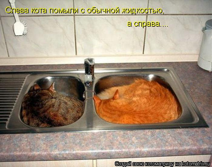 Котоматрица - Слева кота помыли с обычной жидкостью, а справа....