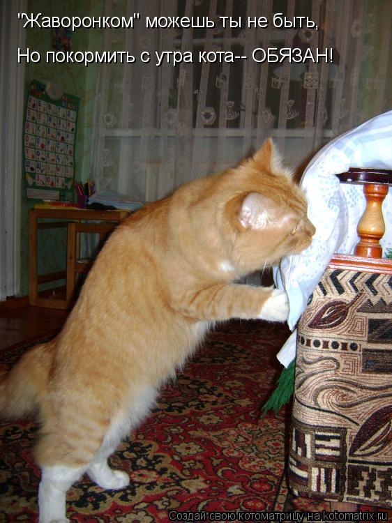 """Котоматрица: """"Жаворонком"""" можешь ты не быть, Но покормить с утра кота-- ОБЯЗАН!"""
