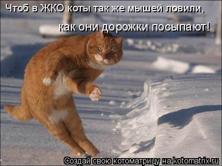 Котоматрица: как они дорожки посыпают! Чтоб в ЖКО коты так же мышей ловили,
