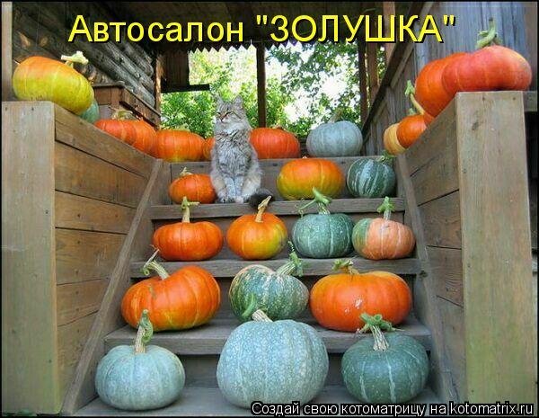 """Котоматрица: Автосалон """"ЗОЛУШКА"""""""