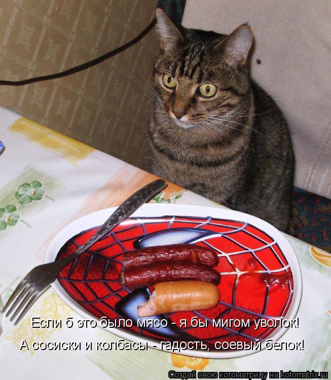 Котоматрица: Если б это было мясо - я бы мигом уволок!  А сосиски и колбасы - гадость, соевый белок!