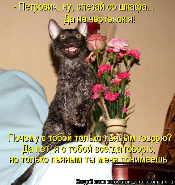 Котоматрица - - Петрович, ну, слезай со шкафа... Да не чертенок я!  Почему с тобой т