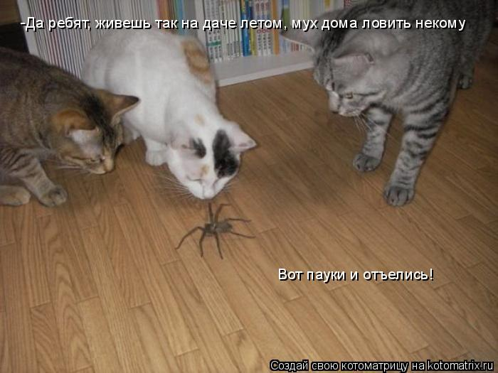 Котоматрица: -Да ребят, живешь так на даче летом, мух дома ловить некому Вот пауки и отъелись!