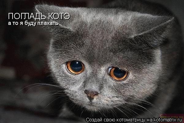 Котоматрица: ПОГЛАДЬ КОТЭ а то я буду плакать